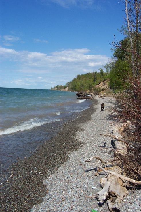 Brown Dog Trots Happily Upon Lake Ontario's Shore