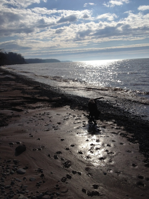 Sun shines upon Lake Ontario's blue waters as a dog walks along the varied shore, leaving paw prints in the clay.
